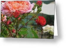 Roses Everywhere Greeting Card