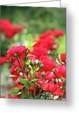 Roses Garden Spring Scene Greeting Card