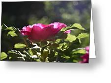 Rose's Illumination Greeting Card