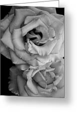 Roses In Black And White Greeting Card