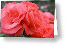 Roses In Dark Pink I Greeting Card