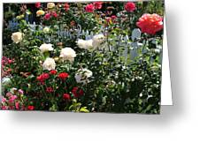 Roses In Red And White Greeting Card