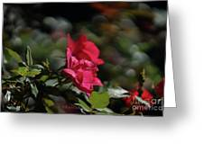 Roses In The Wind Greeting Card