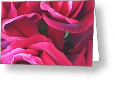 Roses Like Velvet Greeting Card