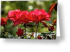 Roses On A Sunny Day Greeting Card