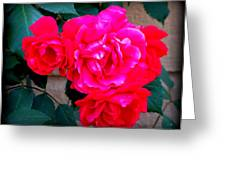 Roses On Stucco Greeting Card
