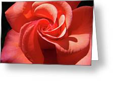 Roses Orange Rose Flower Spiral Artwork 4 Rose Garden Baslee Troutman Greeting Card