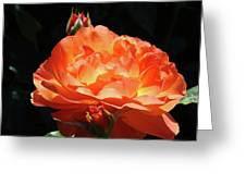 Roses Orange Rose Flowers Rose Garden Art Baslee Troutman Greeting Card