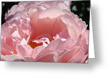 Roses Pink Rose Flower 2 Rose Garden Art Baslee Troutman Collection Greeting Card