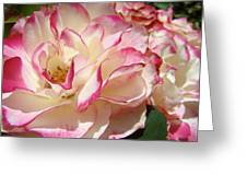 Roses Pink White Rose Flowers 4 Rose Garden Artwork Baslee Troutman Greeting Card