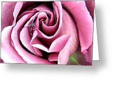 Roses Roses Greeting Card