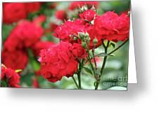 Roses Spring Scene Greeting Card