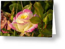 Roses Warm Hearts Greeting Card