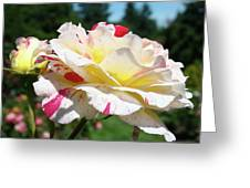 Roses White Pink Yellow Rose Flowers 3 Rose Garden Art Baslee Troutman Greeting Card