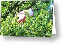 Rosette Spoonbill Greeting Card