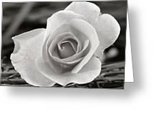 Rosewood009 Greeting Card