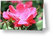 Rosey  Greeting Card