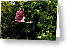Rosie In Flight Greeting Card
