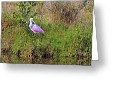 Rosie The Spoonbill Greeting Card