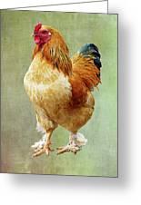 Otis T Rooster Greeting Card