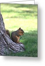 Roswell Squirrel Greeting Card