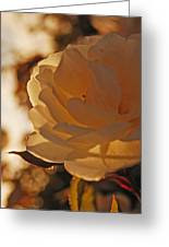 Rosy Afternoon 3 Greeting Card