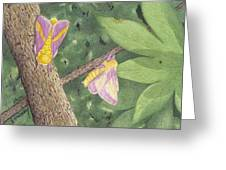 Rosy Maple Moth Gathering Greeting Card