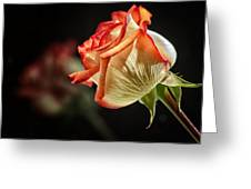 Rosy Red Reflections Greeting Card