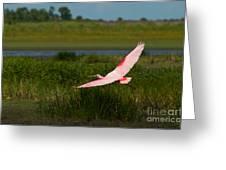 Rosy Soar 61 Greeting Card