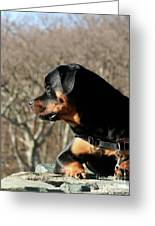 Rottie Profile Greeting Card