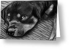 Rotty Greeting Card by Peter Piatt