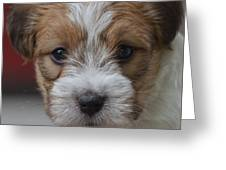 Rough Coat Jrt Pup Greeting Card