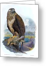 Rough Legged Buzzard Hawk Antique Bird Print The Birds Of Great Britain Greeting Card