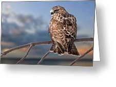 Rough Legged Hawk Greeting Card