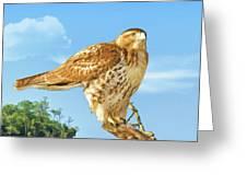 Rough-legged Perch Greeting Card