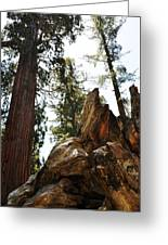 Round Meadow Giant Sequoia Greeting Card