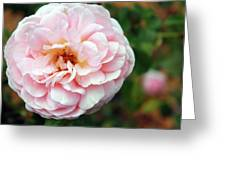 Round Ruffled And Pink Greeting Card