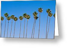 Row Of Palm Trees Greeting Card