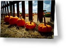 Row Of Pumpkins Sitting Greeting Card