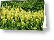 Row Of Yellow Flowers Greeting Card