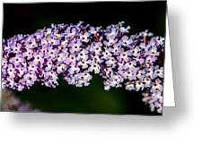 Rows And Flows Of Angel Flowers Greeting Card