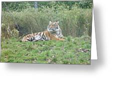 Royal Bengal Tiger Greeting Card