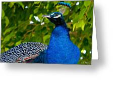 Royal Bird Greeting Card