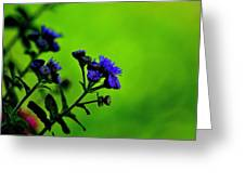 Royal Blue In A Sea Of Green Greeting Card