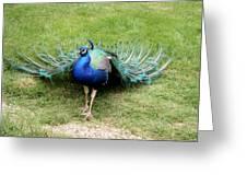 Royal Blue Greeting Card