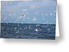 Royal Blue Ocean Tern Greeting Card