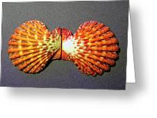 Royal Cloak Scallop Seashell  Greeting Card