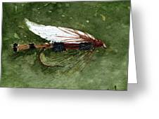 Royal Coachman Wet Fly Greeting Card