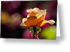 Royal Colors Greeting Card