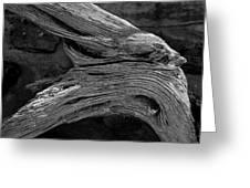 Royal Deadwood Study 2 Greeting Card